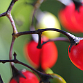 Berries 2 by Mary Bedy