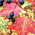 Berries And Leaves by Mary Cloninger