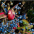 Berries And Red Leaves After The Rain by Mick Anderson