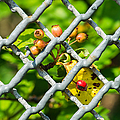 Berries And The City - Featured 3 by Alexander Senin