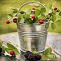 Berries by Darren Fisher
