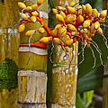Berries On Bamboo Hawaii by Venetia Featherstone-Witty