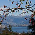 Berry Good View by Jenny Setchell