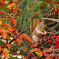 Berry Loving Squirrel by Kerri Farley