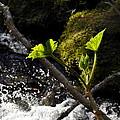 Beside The Waterfall by Cathy Mahnke
