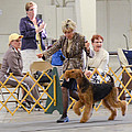 Best In Show Competition by Dog Show Video