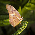 Best Side Of The Butterfly by Jean Noren