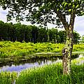 Bethel Landscape 3 by Madeline Ellis