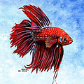Betta-big Red by Richard Brooks