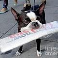 Betty The News Dog by Ed Weidman