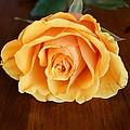 Betty's Rose by Kerri Mortenson