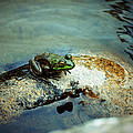Between A Frog And A Hard Place by Holly Blunkall