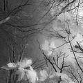 Between Black And White-02 by Casper Cammeraat