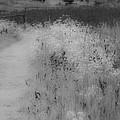 Between Black And White-28 by Casper Cammeraat