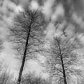 Between Black And White-30 by Casper Cammeraat