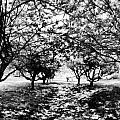 Between Trees II by Tina Baxter