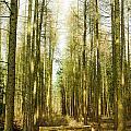 Betweenthe Trees by Babs Gorniak