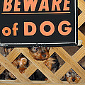 Beware Of Dog by John Dauer