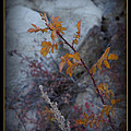 Beware The Thorns by Ernie Echols