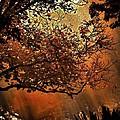 Bewitching Kansas by Abbie Loyd Kern