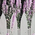 Beyond A Garden's Picket Fence by Angela Davies