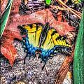 Beyond Chrysalis-tiger Swallowtail by Dan Stone