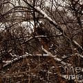 Beyond The Thicket - Abandoned by Angie Rea
