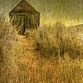 Beyond The Weeds by Margie Hurwich