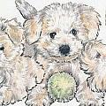 Bichon Frise Puppies by Barbara Keith