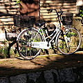 Bicycle And Baskets Kyoto - Philosophers' Walk by Jacqueline M Lewis