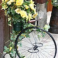 Bicycle Plant Holder by Holly C. Freeman