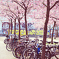 Bicycles Under The Blooming Trees. Pink Spring In Amsterdam  by Jenny Rainbow