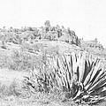 Bidwell Park Cactus by Frank Wilson