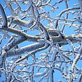 Bifurcations In White And Blue by Brian Boyle