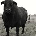 Big Bad Black Bull by Ransom Williams