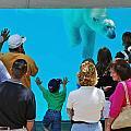 Big Bear by Rick Selin