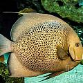 Big Beautiful Fish by Cheryl Baxter