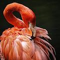 Big Bird by Karol Livote