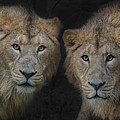 Big Brothers by Joachim G Pinkawa