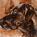 Big Brown Dog by James Swanson