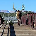 Big Bull On The Bridge by Shane Bechler