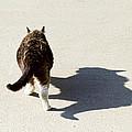 Big Cat Ferocious Shadow by James BO  Insogna