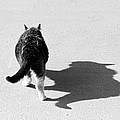 Big Cat Ferocious Shadow Monochrome by James BO  Insogna