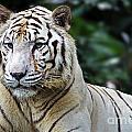 Big Cats 2 by Ben Yassa
