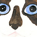 Big Eyed Cat by Christine Callahan