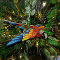 Big Glider Macaw Digital Art by Thomas Woolworth
