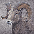 Big Horn Ram by Mike Stinnett