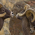 Big Horn Rams   #4989 - Signed by J L Woody Wooden