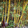 Big Island Bamboo by Daniel Hagerman