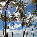 Big Island Hawaii Palm Stretch by Joseph Semary